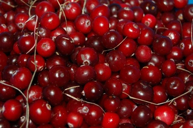 Arándano rojo para combatir la cisititis