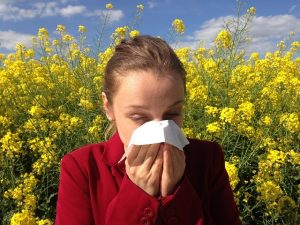 Desmodium antialérgico